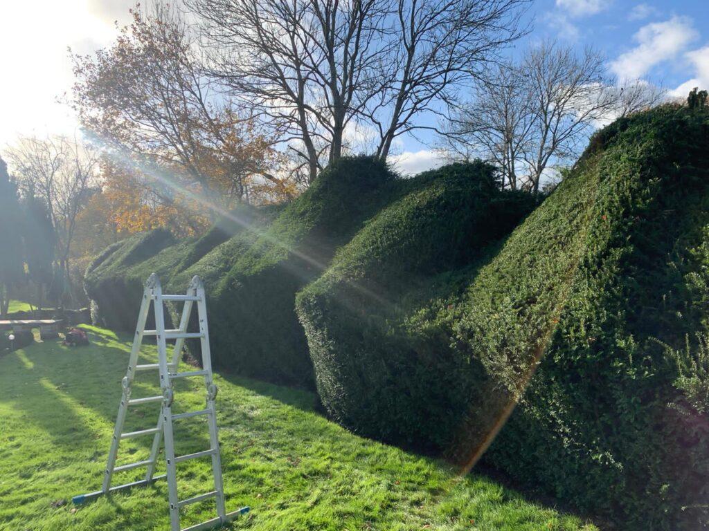 Hedge cutting Dorking
