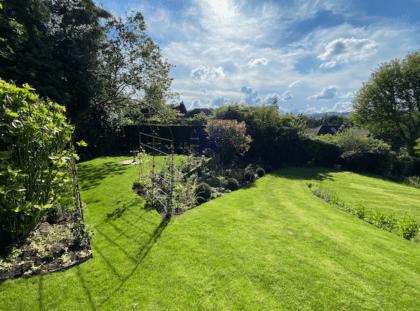 Large lawn Dorking