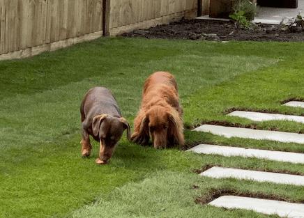 New lawn Reigate