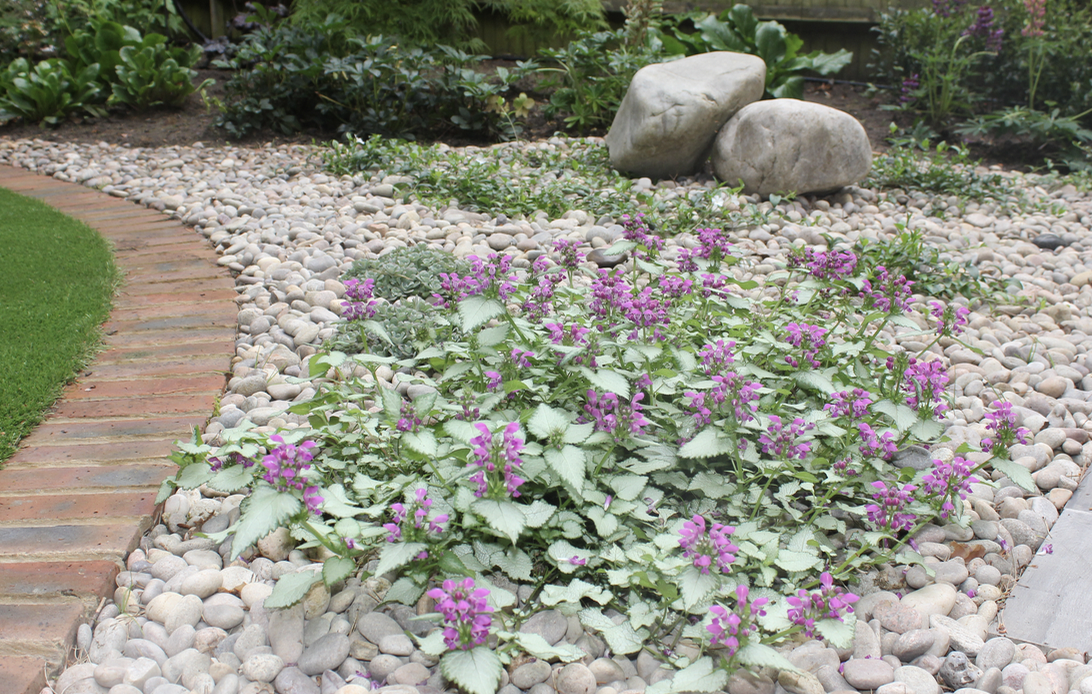 Planting with gravel