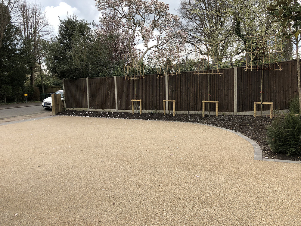 Pleached trees and resin bound drive